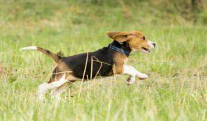 puppycursus Wassenaar